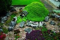 Анонс: Дизайн альпийской горки (Если гора не идет в сад…)