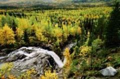 Анонс: Деревянные проблемы лесной страны