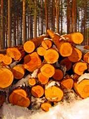 Анонс: Сказки зимнего леса
