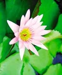 Анонс: Магия цветов