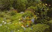 Анонс: Сад непрерывного цветения