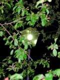 Анонс: Свет в ночи