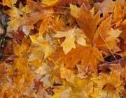 Анонс: За порой листопада