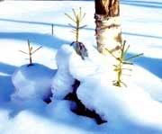 Анонс: Готовим сад к зиме