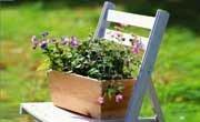 Анонс: Весна приходит в сад