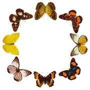 Анонс: Бал бабочек