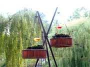 Анонс: Мой японский сад