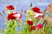Анонс: Цветы по осени считают