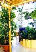 Анонс: Сад в интерьере