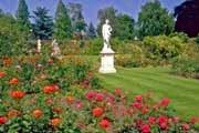 Анонс: Королева любого сада