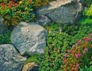 Анонс: Альпийская горка, устройство и растения альпийской горки