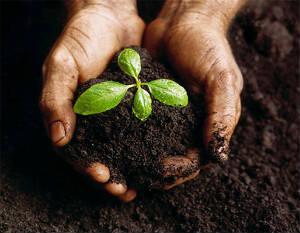 Земля сеяная плодородная (чернозем)