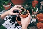 Интерьерный тренд: выбираем крепеж для домашней оранжереи