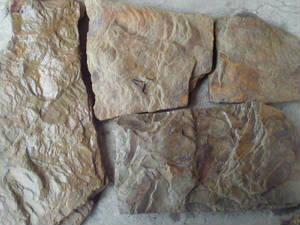 Камень натуральный природный Дракон пластушка песчаник