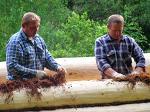 Красный мох - лучший утеплитель при строительстве бревенчатой бани