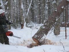 Анонс: Этапы строительства дома из сруба: от заготовки леса до рубки сруба