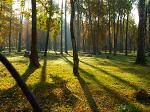 Заповедник площадью 150 тысяч гектаров может появиться на территории Московской области